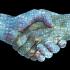 La importancia del Blockchain en la seguridad Empresarial